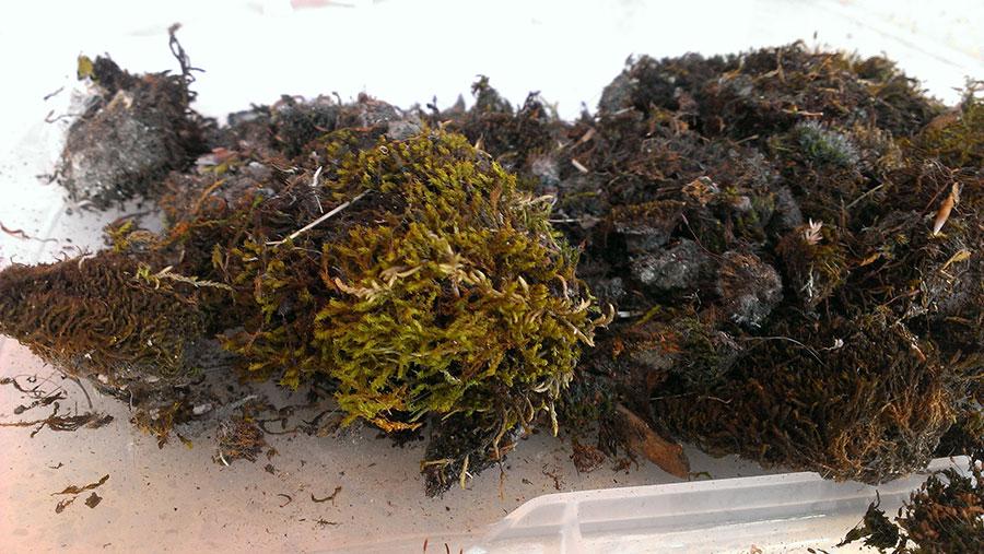 Moss Propagation Science World