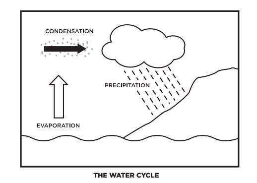Pop Bottle Water-Cycling Terrarium - Science WorldScience World