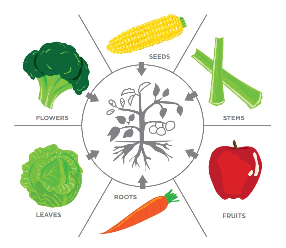 Plants We Eat - Science World