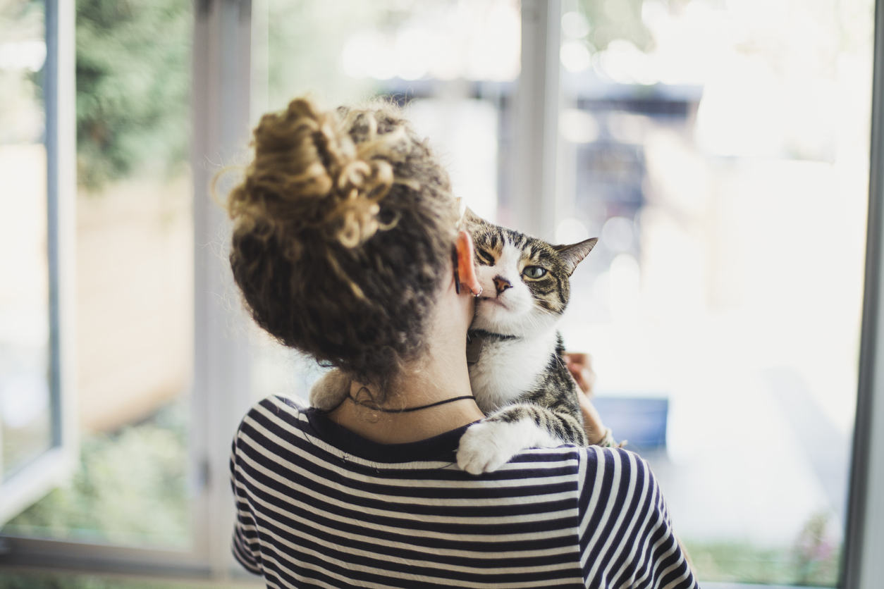 The Secret Power of a Cat's Purr - Science World